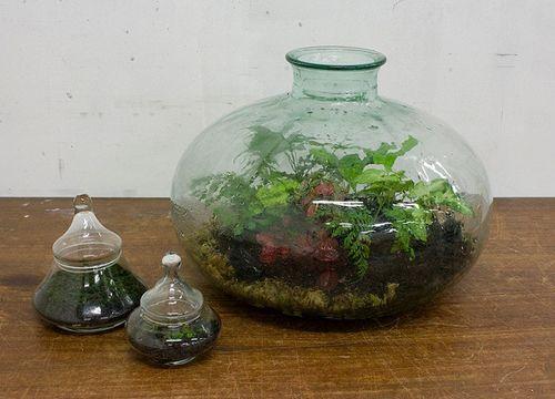влажный сад в стеклянной бутылке