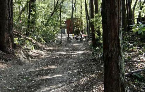 дом из блок контейнеров в густом лесу