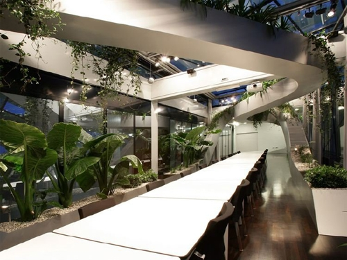 зимний сад на мансардном этаже