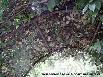 садовая арка из пластиковых труб
