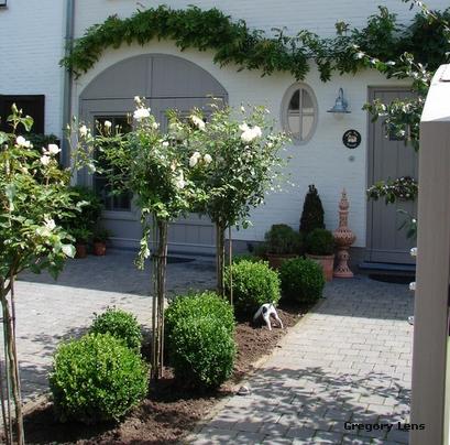 садовые арки шпалеры