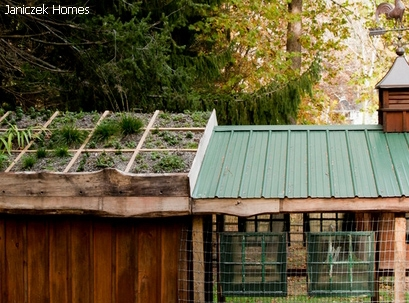 озеленение крыши курятника