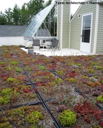 контейнерное озеленение крыши