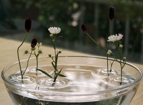 несколько плавающих ваз в одном сосуде