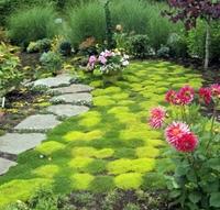 как посадить мох на земле
