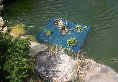 самодельная плавающая клумба на воде