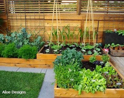 овощные грядки на широких садовых дорожках