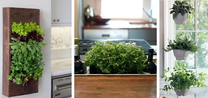 выращивание ароматных трав на кухне