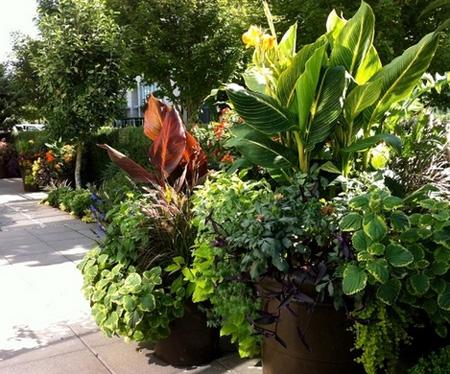 горшечные растения в ландшафтном дизайне