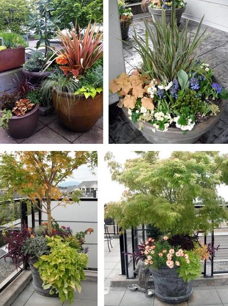 сочетание нескольких видов растений в одном горшке