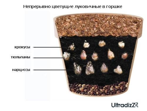 послойная посадка луковичных в цветочном горшке