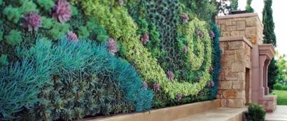 пример вертикального озеленения патио