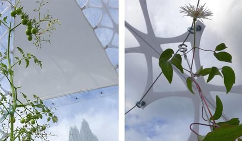 система крепления шторок и опор для растений к куполу из поликарбоната