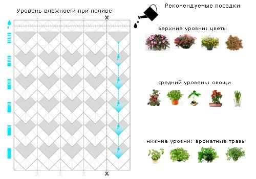 особенности полива и выращивания растений для занавесок ECORTINA