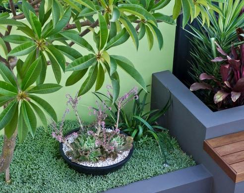 растения в маленьком дворике