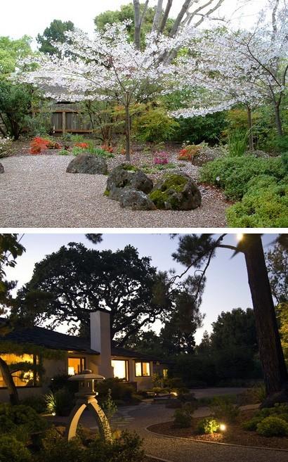 растения в японском саду