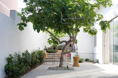 озеленение бетонного двора