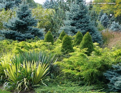 хвойные разной текстуры в садовом дизайне