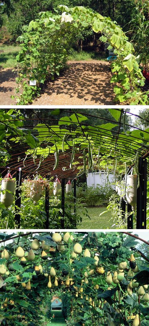 высокие арочные огороды