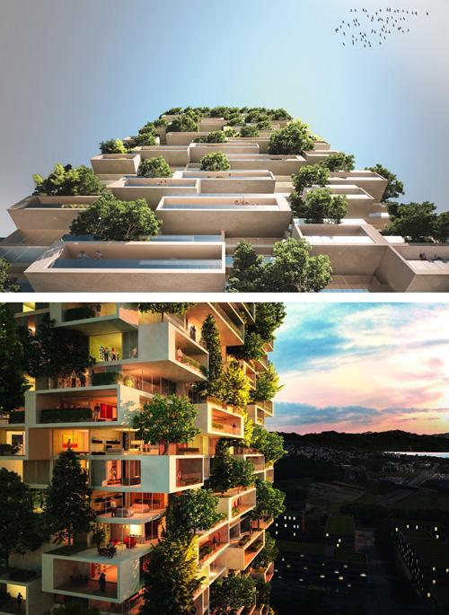 кедры на балконах жилого дома